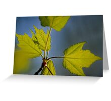 Springtime Leaves III Greeting Card