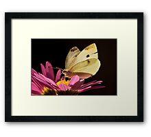 Cabbage Moth (Pieris rapae) Framed Print