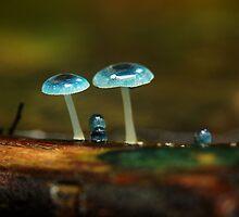 Fungi Family by Kylie Reid