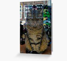 Amsterdam Shop Cat Greeting Card