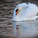 A Swan of Hyde Park by Kent Burton