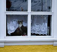 Icelandic Cat by antonio55