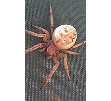 A Friendly Spider Photographic Print