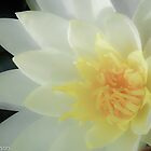 Waterlily by Marian Grayson