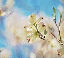 Dogwood Against Blue Sky by Lois  Bryan