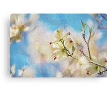 Dogwood Against Blue Sky Canvas Print