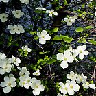 Waterside Dogwood by Loree McComb