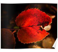 red leaf: backlit Poster