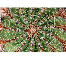 cactus symmetricus Photographic Print