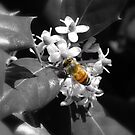 Honey Bee & Holly by Sharon Woerner