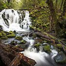 Olivia Creek by Ian Berry