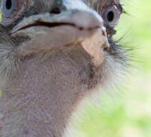 ostrich in the farm Sticker