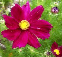 floral depth perception by angeldragon069