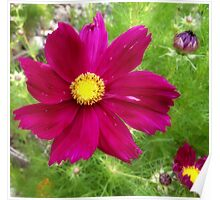 floral depth perception Poster