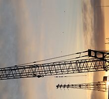 Cranes at Sunset by nicomelbourne