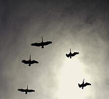Pelican Flyover by NickVerburgt