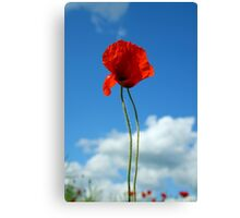 Poppy against blue sky Canvas Print