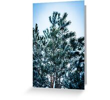 Pine tree with snow Greeting Card