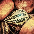 Gourds & Pumpkins by John Conway