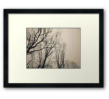 Trees Waiting for Winter Framed Print