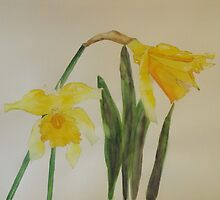 Yellow Daffodils by Carolotta