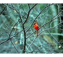 Early Morning Chirper (landscape) Photographic Print