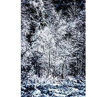 Snowy trees Photographic Print