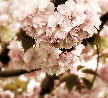 Spring Whisper by Jessica Jenney