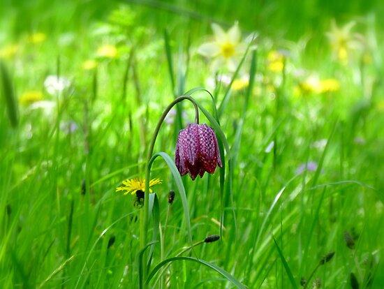 Springtime at Batemans by mikebov