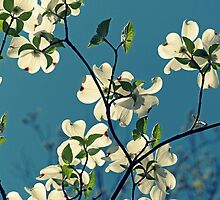 Dogwood by Susan S. Kline