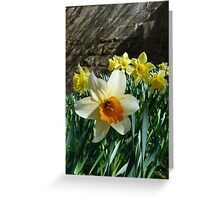 Daffodil and the Wall Greeting Card