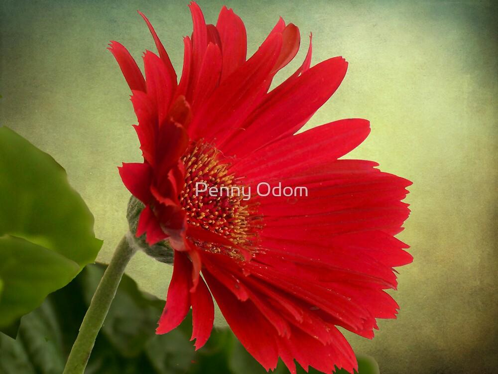 Gerbera Daisy .•*¨`*•✿ Red by Penny Odom