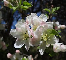 Blossoms! by vigor