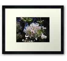 Blossoms! Framed Print