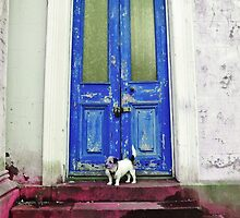 Lola on tune doorstep  by Debra Kurs