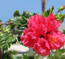 Cuban Flower by vette