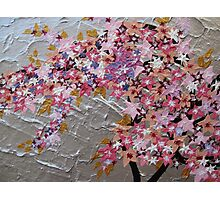 blue and pink and purple sakura Photographic Print