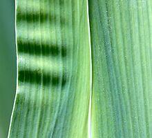 spring green by yvesrossetti