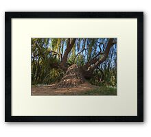 Leaning Tree HDR Framed Print