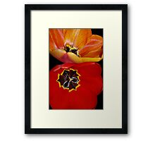 pretty tulip pair Framed Print