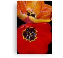 pretty tulip pair Canvas Print