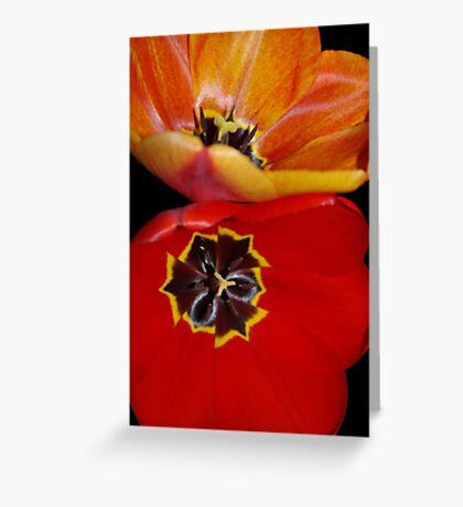 pretty tulip pair Greeting Card