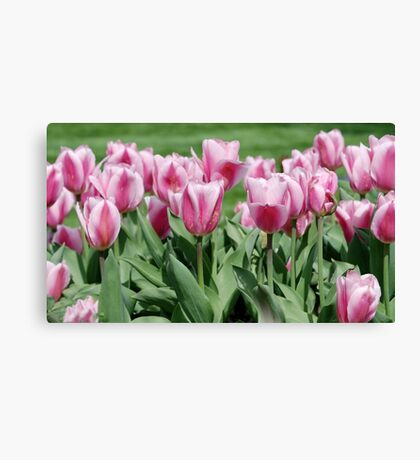 Pretty in Pink Canvas Print