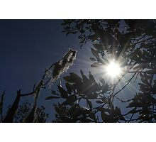 Sunlight through the Leaves Photographic Print
