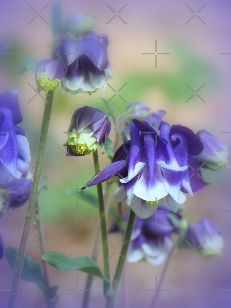 Spring Beauty by Julie's Camera Creations <><