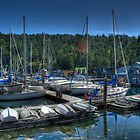 Maple Bay, BC by Trish  Hooker