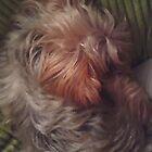puppy by yendoll