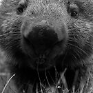 Wendy the Wombat by Sharon Kavanagh