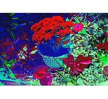 Reds, greens and shadows Photographic Print