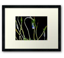 H20 Super Macro of Moss Framed Print